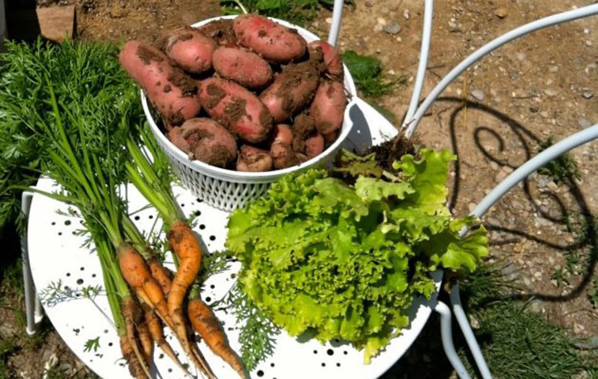 Fresh carrots, lettuce and potatoes